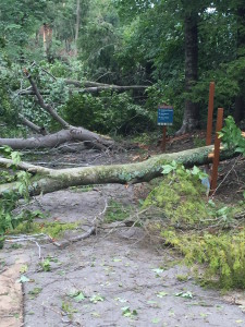 The Sleeping Bear Heritage Trail after the storm